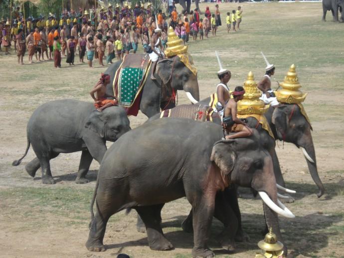 Elephants at Surin Elephant Festival