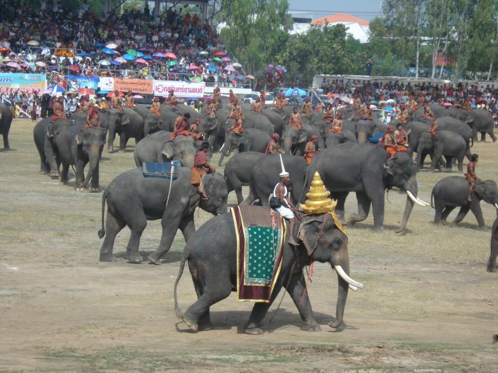 Surin Elephant Festival Grand Finale