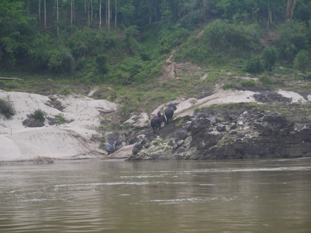 Elephants On Banks Of Mekong River In Thailand