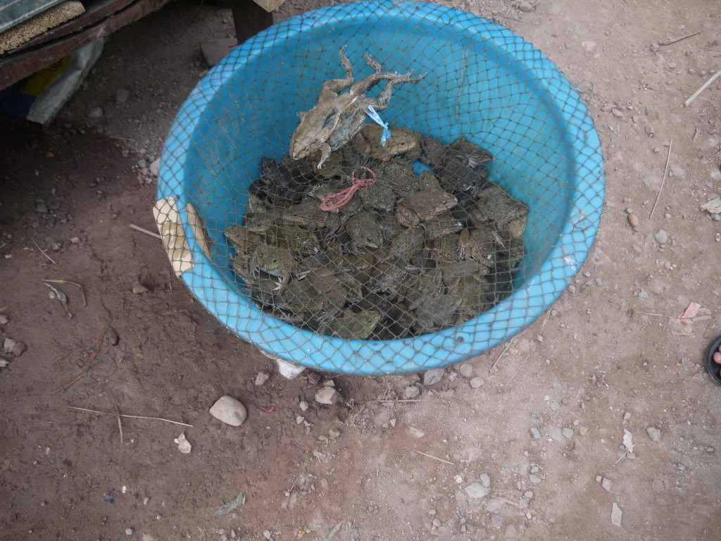 Frogs For Sale At Pakbeng Market, Laos