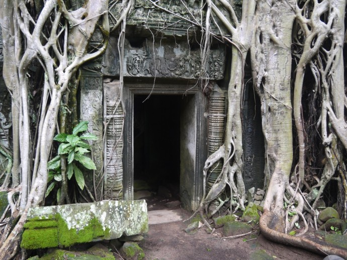 Temple Entrance Being Swallowed By A Massive Tree