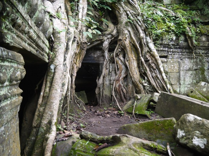 Yet More Tree Roots Devouring Ta Prohm Temple