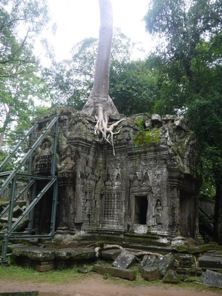 Tree Growing On Top Of A Building Ta Prohm Temple