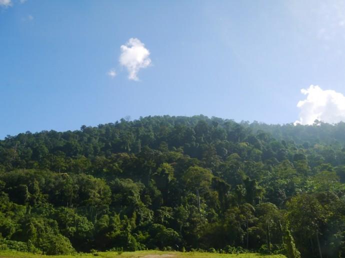 Beautiful Malaysian Countryside