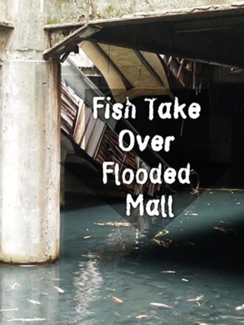 Fish Take Over Abandoned Bangkok Shopping Mall