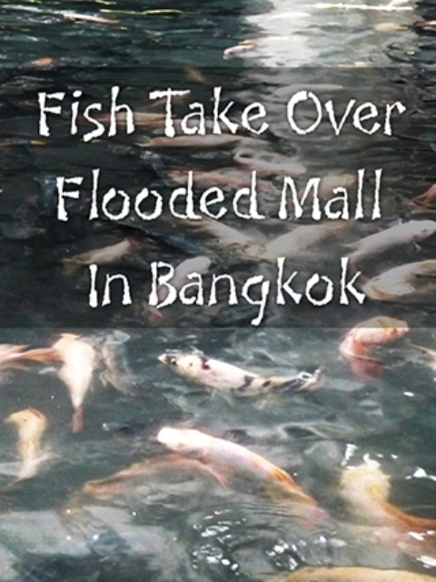 Flood Bangkok Mall Taken Over By Thousands Of Fish