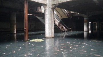 fish-abandoned-mall-1