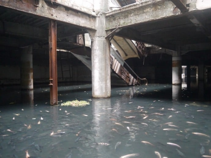 Fish Take Over Flooded Shopping Mall In Bangkok