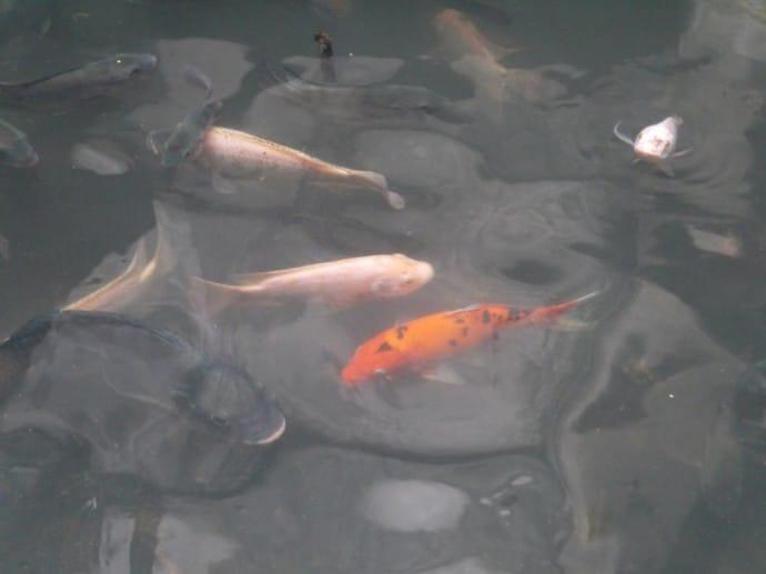 Different Types Of Fish At Abandoned Bangkok Mall