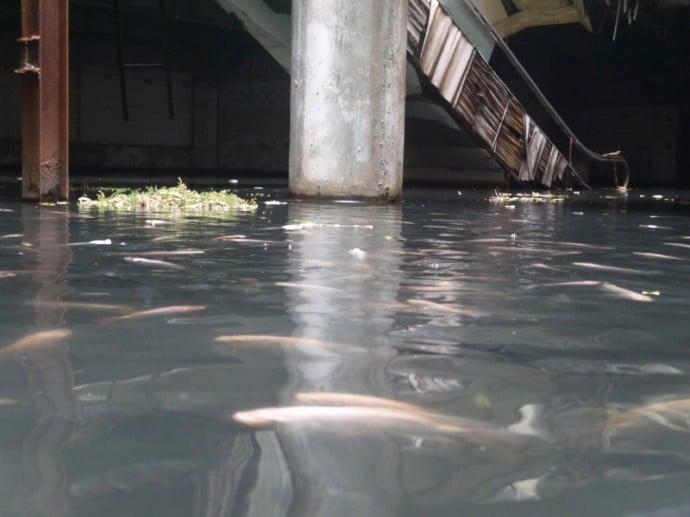 Huge Fish Tank In Bangkok