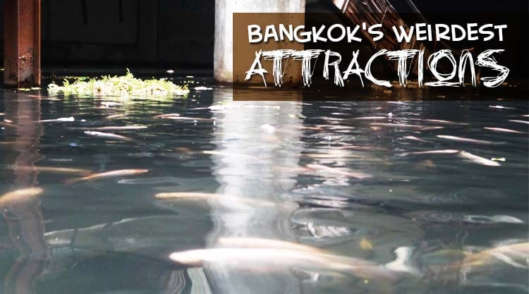 Bangkok's Weirdest Attractions