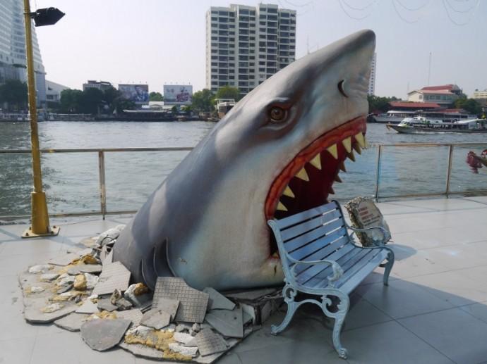 Bangkok's Famous Shark