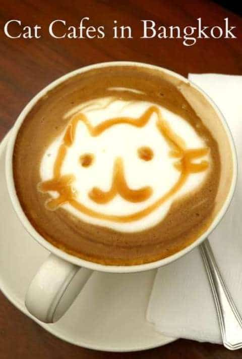 Cat's Face In Coffee - Bangkok Cat Cafes