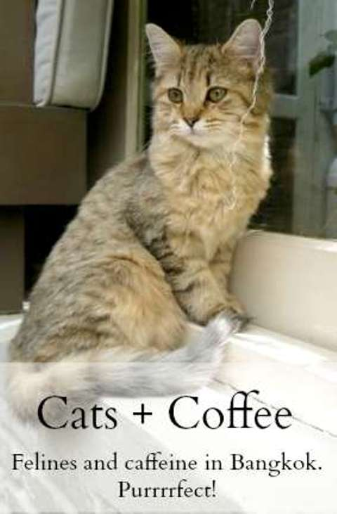Cats & Coffee - Our Two Favorite Things - Bangkok, Thailand