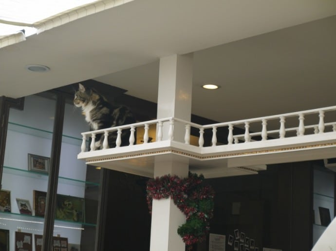 Cat Observing The Customers From High Up