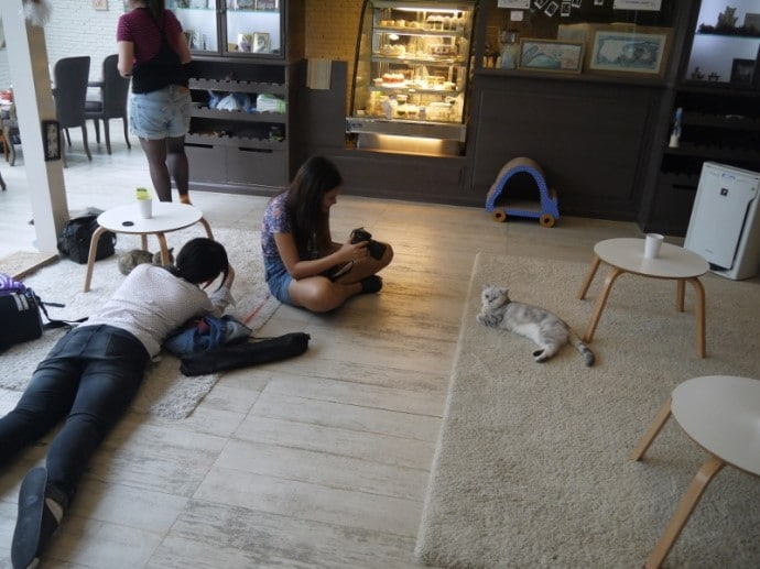 Customers Taking Photos Of The Cats