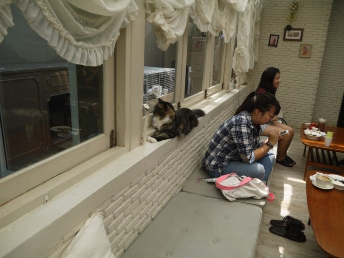 Cat Sitting On Windowsill