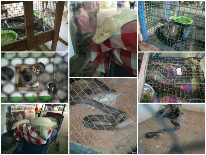 Caged Snakes At King Cobra Village, Thailand