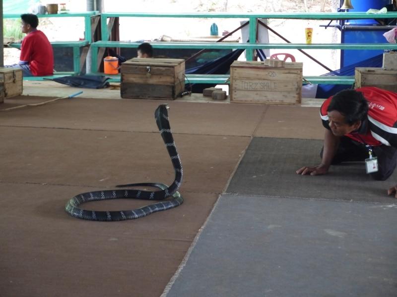 King Cobra Village, Khon Kaen, Thailand - Renegade Travels