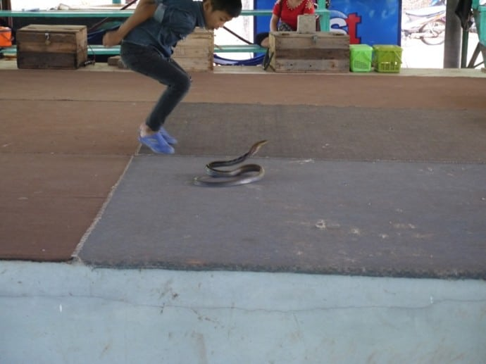 Young Boy And Snake At King Cobra Village