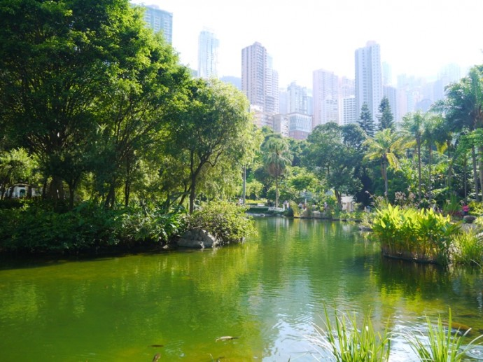 The Lake In Hong Kong Park