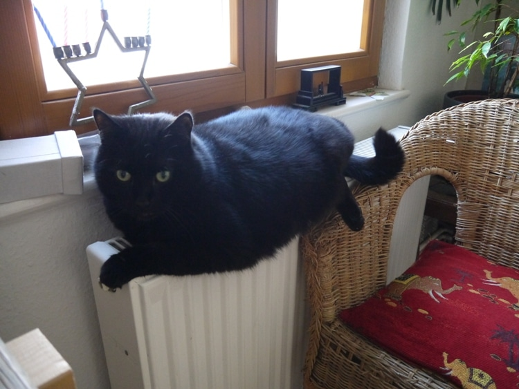 Cat Relaxing On Radiator In Berlin