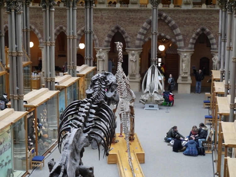 Children Working At Oxford University Museum Of Natural History
