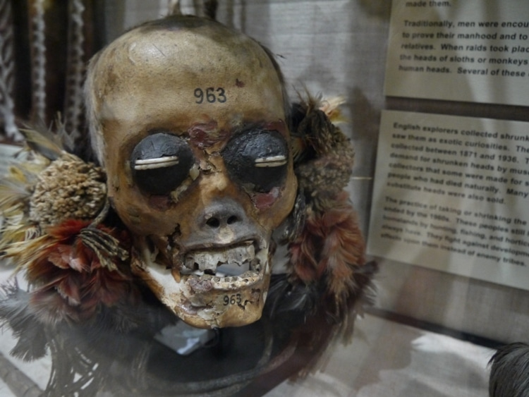 The Head Of An Enemy At Pitt Rivers Museum, Oxford