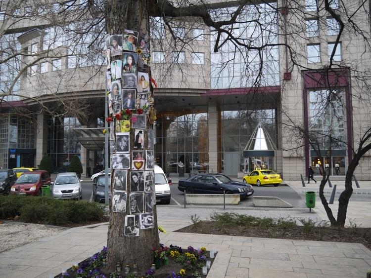 Michael Jackson Memorial Tree, Budapest