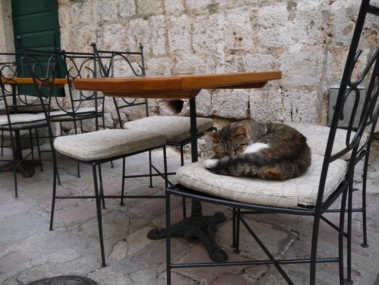 Kotor Has Lots Of Cats