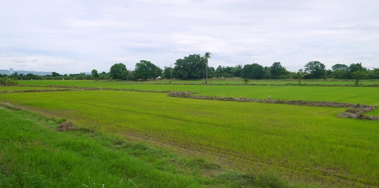 View Of Rice Fields On The Bangkok To Kanchanaburi Train Journey