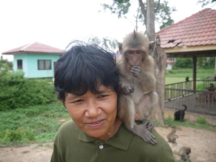 A Friendly Monkey At Wat Kai, Ayutthaya