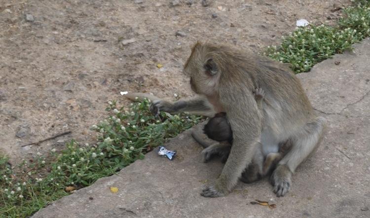 Mother & Baby At Wat Kai, Ayutthaya