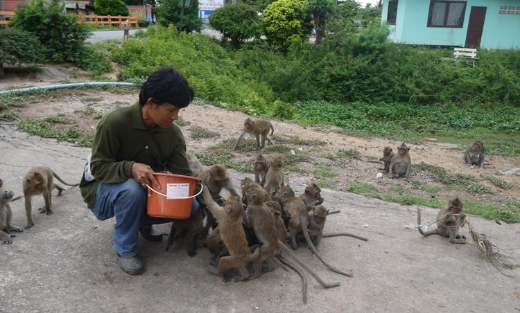 Feeding Time At Wat Gai, Ayutthaya Weird Thailand temples